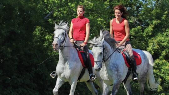 La passion des chevaux au Québec